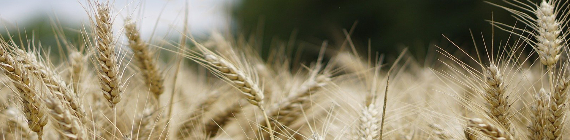 Sud Agro industrie, Business et Etudes (SABE)